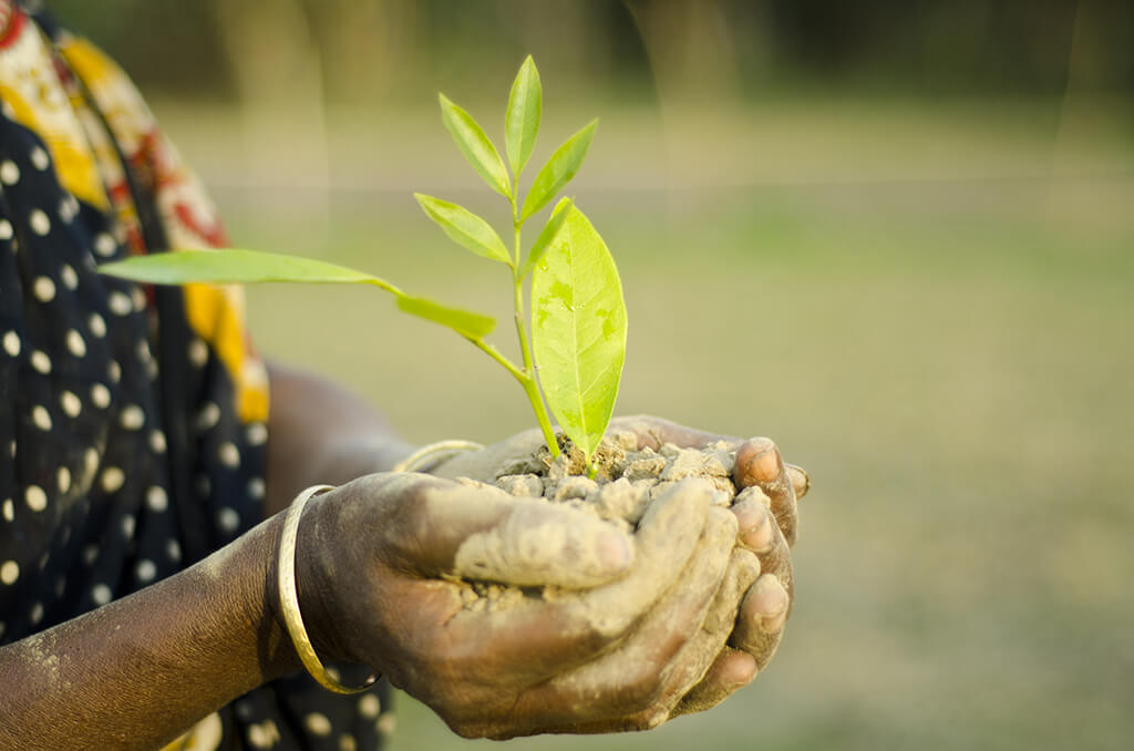 social forestry C social forests: social forestry is the practice of forestry which aims at meeting the requirement of rural and urban population the object of social forestry is to meet the basic needs of community aiming at bettering the conditions of living through.