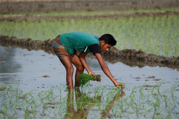 BDT 565bn loss in farmers' income in 45 days